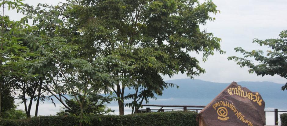 ร่วมปลูกป่าเพื่อช่วยสร้างธรรมชาติ� ...