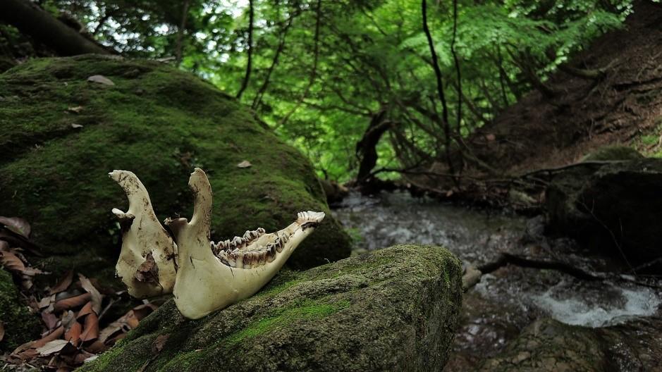 ป่าอะโอะกิงะฮะระ ความสวยงามที่ระคนกับความน่ากลัว