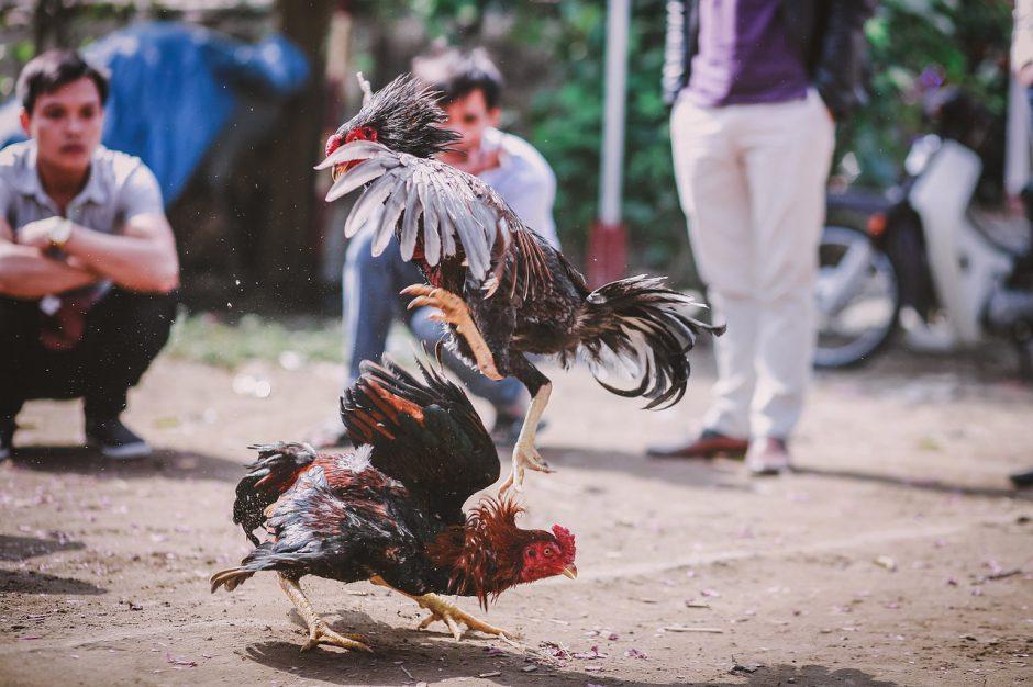 ลีลาเชิงไก่ชนภาคใต้